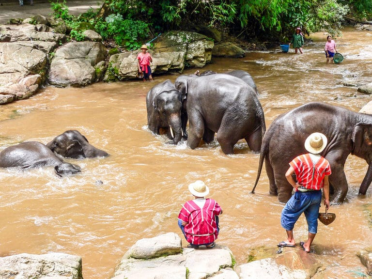 Elephants bathing at the Chiang Mai Elephant Sanctuary.