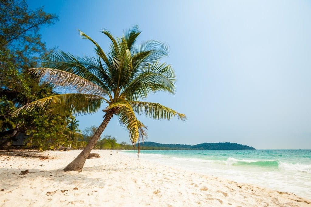 Leaning palm tree near ocean on Long Beach, Koh Rong Cambocia